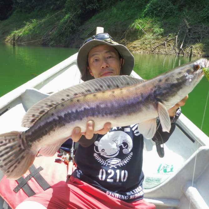 Michio Sanada using a 6m diver, Deps Cascable for Giant Snakehead.